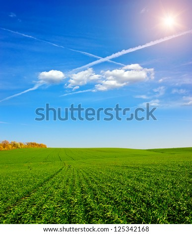 Beautiful blue sky and white clouds. Deep blue sky and clouds. Green Field. wonderland - stock photo
