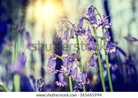 Beautiful bluebells in spring forest. Nature background - stock photo