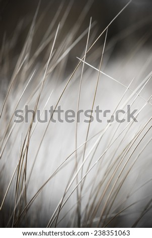 beautiful blur dry grass and bent background - vintage retro monochrome effect