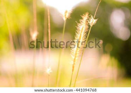 Beautiful blurred sunny yellow green meadow closeup background with sun flare. - stock photo