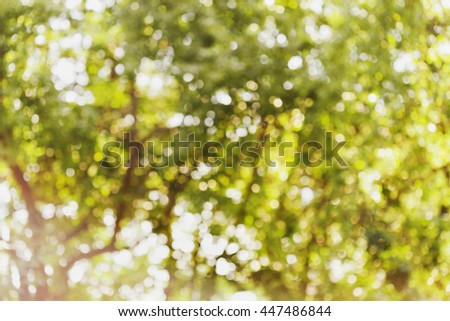 Beautiful bokeh background of defocused tree and foliage. Natural blurred backdrop of green leaves. Summer or spring season. - stock photo