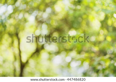 Beautiful bokeh background of defocused tree. Natural blurred backdrop of green leaves. Summer or spring season. - stock photo