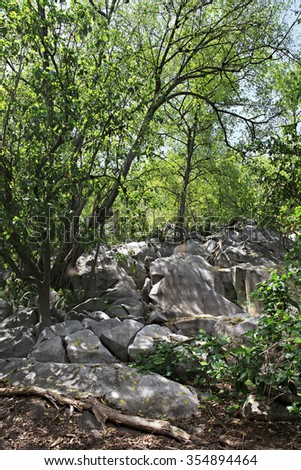 Beautiful boulders and trees on the Cousin Island. Seychelles. - stock photo