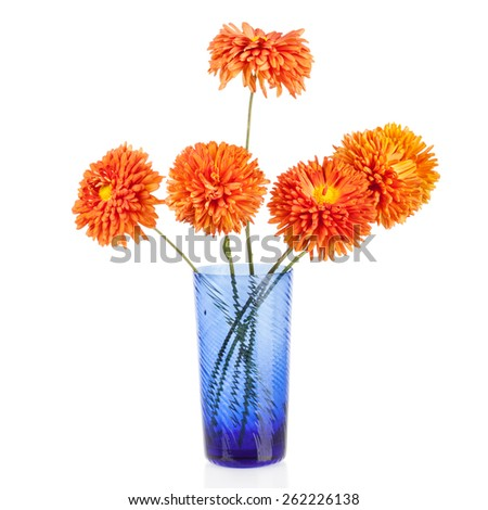 Beautiful bouquet of aster flowers in blue vase