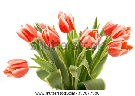 Beautiful bouquet of bright tulips. Isolated on a white background. - stock photo