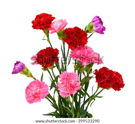 Beautiful bouquet of carnation flowers isolated on white background - stock photo