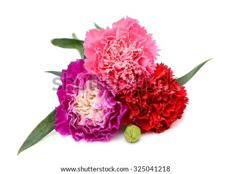 Beautiful bouquet of carnations flower isolated on white background - stock photo