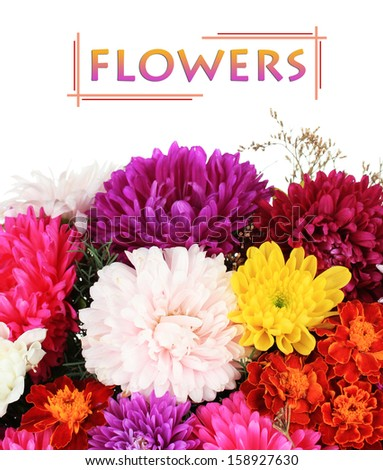 Beautiful bouquet of chrysanthemums on white background - stock photo