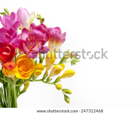 Beautiful bouquet of colorful freesia on a white background - stock photo