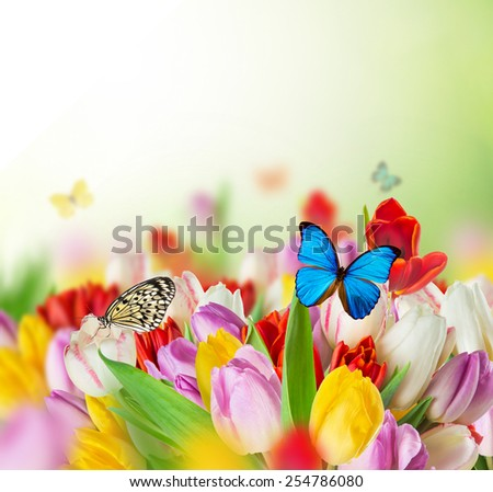 Beautiful bouquet of colorful tulips flowers with exotics butterfliers.