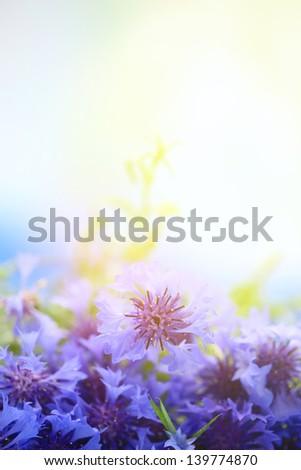 Beautiful bouquet of cornflowers outdoors - stock photo