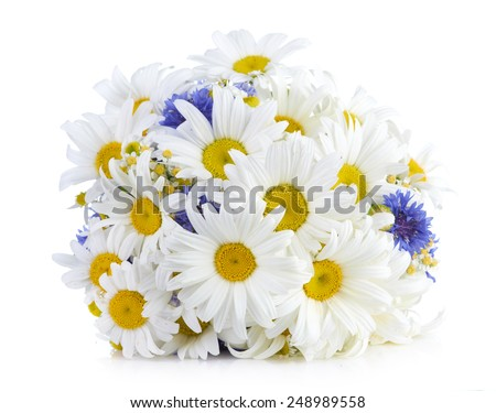 beautiful bouquet of daisies in vase - stock photo