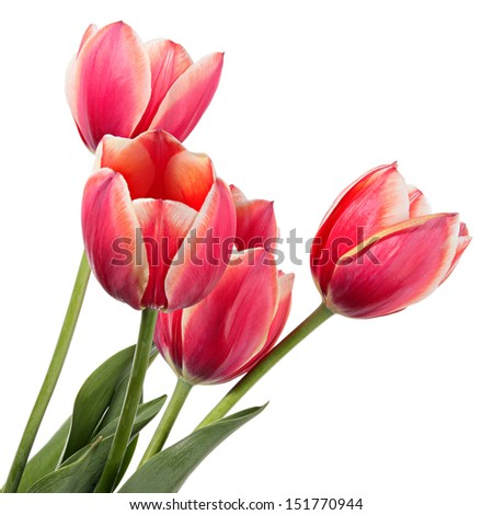 Beautiful bouquet of flowers on white background - stock photo