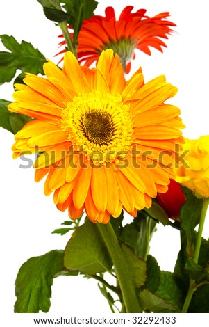 beautiful bouquet of gerber on a white background