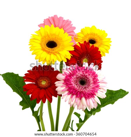 Beautiful bouquet of gerbera flower isolated on white background - stock photo