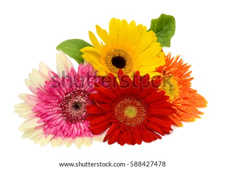 Beautiful bouquet of gerbera flower isolated on white background