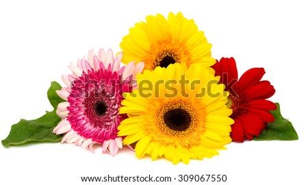 Beautiful bouquet of gerberas isolated on white background - stock photo