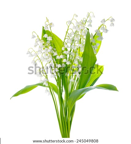 beautiful bouquet of lily the valley flower is isolated on white background - stock photo