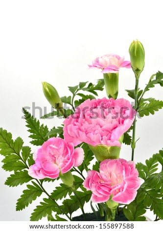 Beautiful bouquet of ping carnation flowers - stock photo