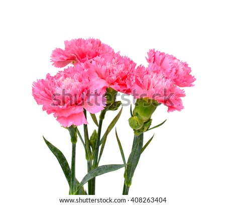 Beautiful bouquet of pink carnation flowers isolated on white background - stock photo