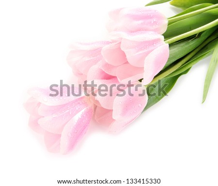 Beautiful bouquet of pink tulips, isolated on white - stock photo