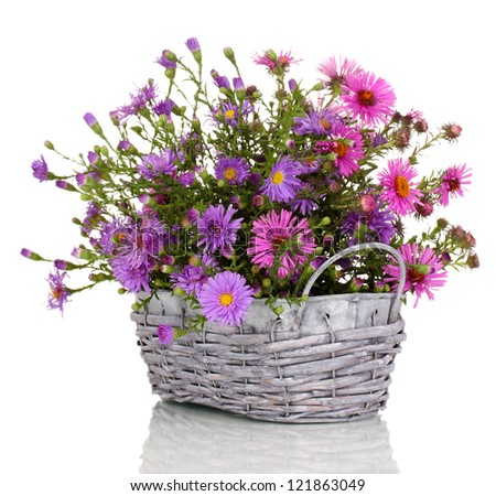 beautiful bouquet purple flowers basket isolated stock photo, Beautiful flower