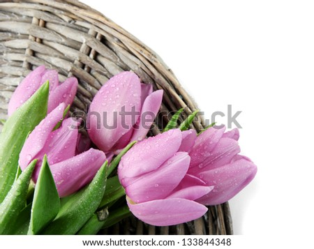 Beautiful bouquet of purple tulips, isolated on white - stock photo
