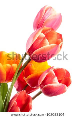 Beautiful bouquet of spring flowers. Tulips on a white background - stock photo