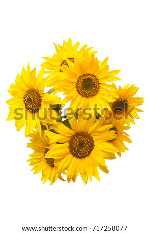 Beautiful bouquet of sunflower flowers isolated on white background. Agriculture, oil, seeds. Fashionable and creative composition. Flat lay, top view