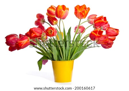 Beautiful bouquet of tulips in yellow pot isolated on white background