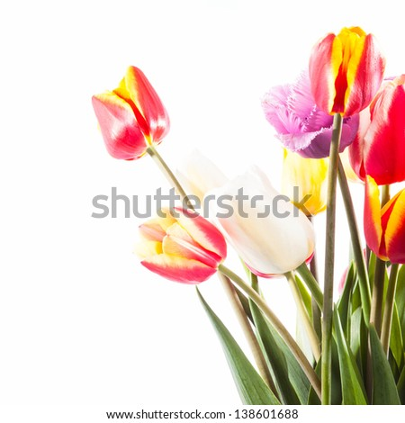 Beautiful bouquet of tulips on the white background - stock photo