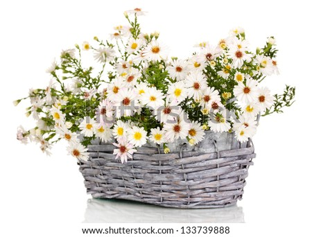 beautiful bouquet of white flowers in basket isolated on white