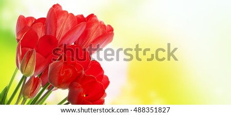 Beautiful bouquet red tulip flowers on abstract   nature background