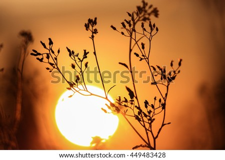 Beautiful branch at  mountain on sunset background