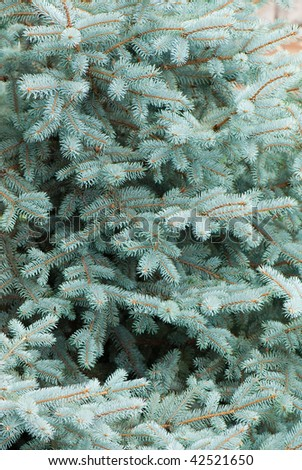 beautiful branch of blue fir-tree as abstract christmas background - stock photo