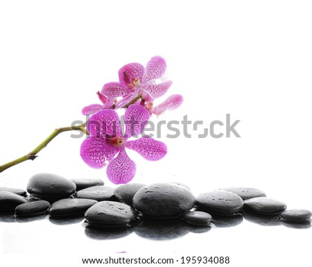 beautiful branch pink orchid with therapy stones