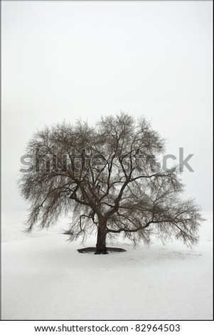 Beautiful branched tree alone in a white world