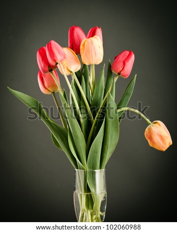 Beautiful bright and colorful tulip blossoms 7. - stock photo