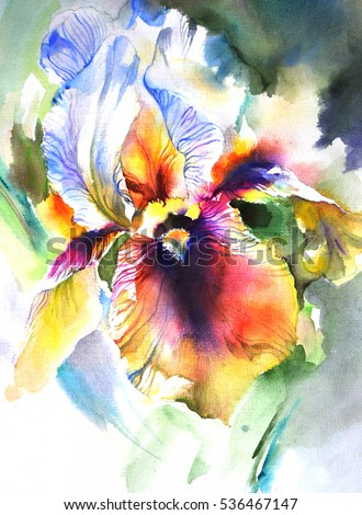 Beautiful  bright and rich exotic flower iris on dark background.  Realistic drawing  on paper texture, watercolor painting- hand illustration