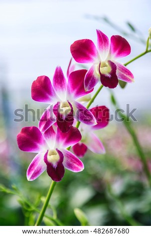 Beautiful bright orchid flowers in Botanical garden , close-up details