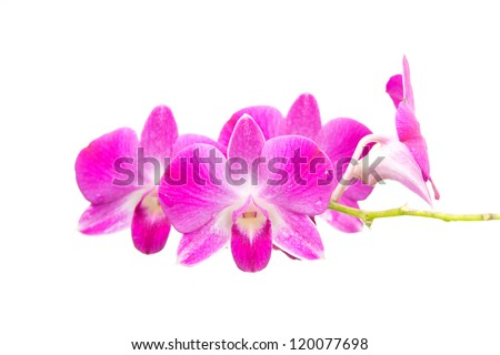 Pin Vector Orchid Branch Silhouette Illustration Pictures ...