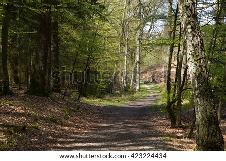 beautiful bright spring forest in Jutland, Denmark - stock photo