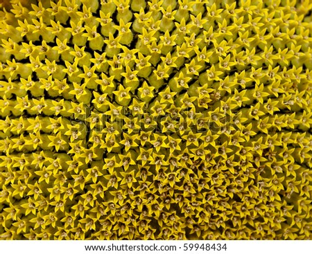 Beautiful bright texture of the head of sunflower - stock photo