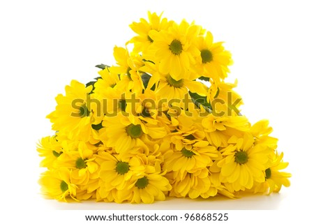 Beautiful bright yellow chrysanthemums on white background - stock photo