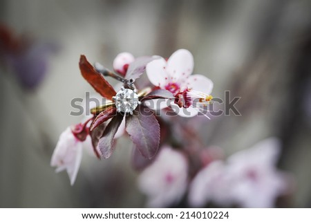 Beautiful brilliant cut diamond engagement ring blurred on flowering plum - stock photo