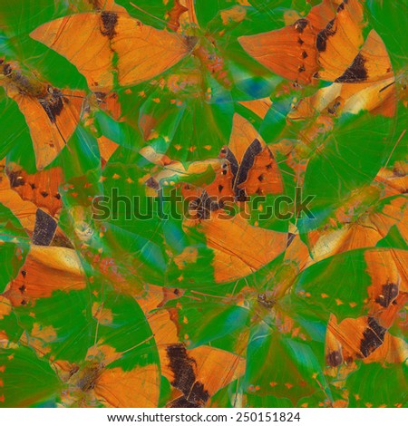 Beautiful Brown and Green Background Texture made of Tawny Rajah Butterflies - stock photo