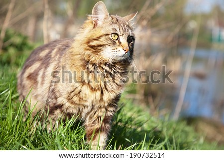 beautiful brown cat in the woods - stock photo