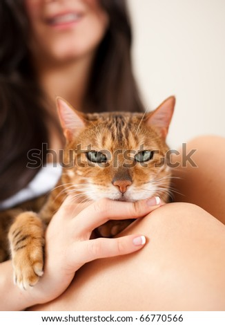 Beautiful Brown Cat Relaxing on Owners Lap and Hands - stock photo