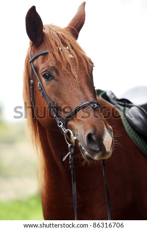 Beautiful brown horse at farm - stock photo