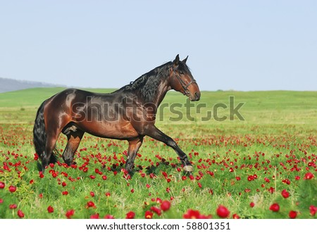 beautiful brown horse on pasture